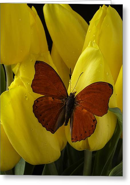 Rain Drop Greeting Cards - Red Butterfly On Yellow Tulip Greeting Card by Garry Gay