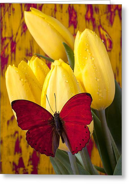 Red Bouquet Greeting Cards - Red butterfly resting on tulips Greeting Card by Garry Gay