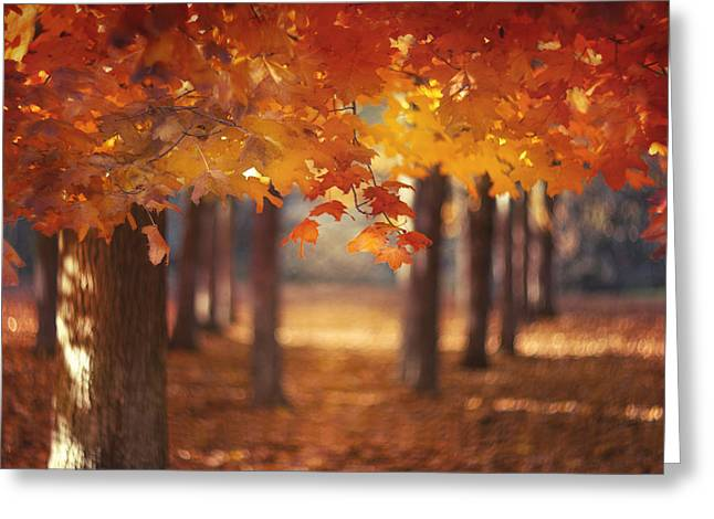 Red Canopy Greeting Card by Magda  Bognar
