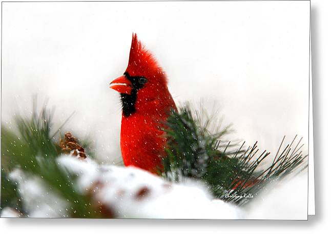 Red Bird In Snow Greeting Cards - Red Cardinal Greeting Card by Christina Rollo