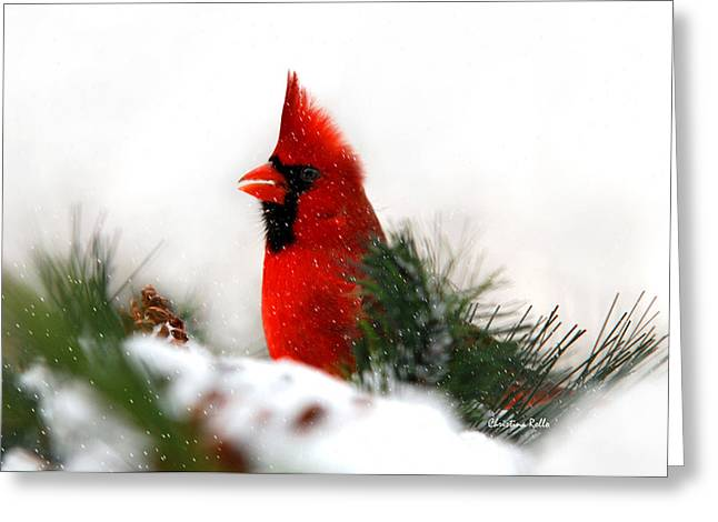 Christmas Art Greeting Cards - Red Cardinal Greeting Card by Christina Rollo