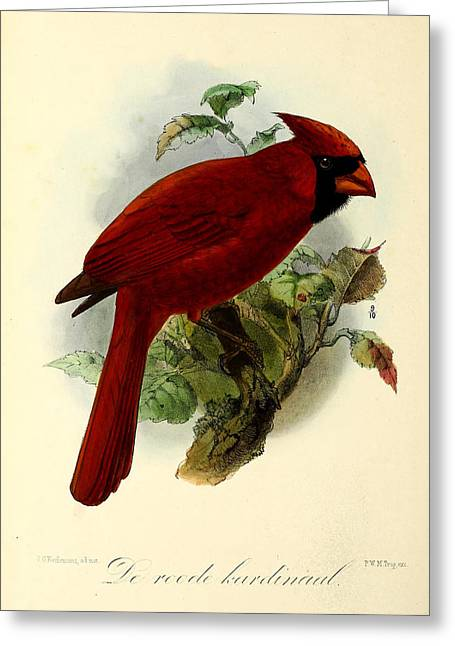 Red Cardinal Greeting Card by J G Keulemans