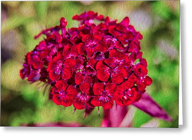 Methow Valley Greeting Cards - Red Carnations Greeting Card by Omaste Witkowski