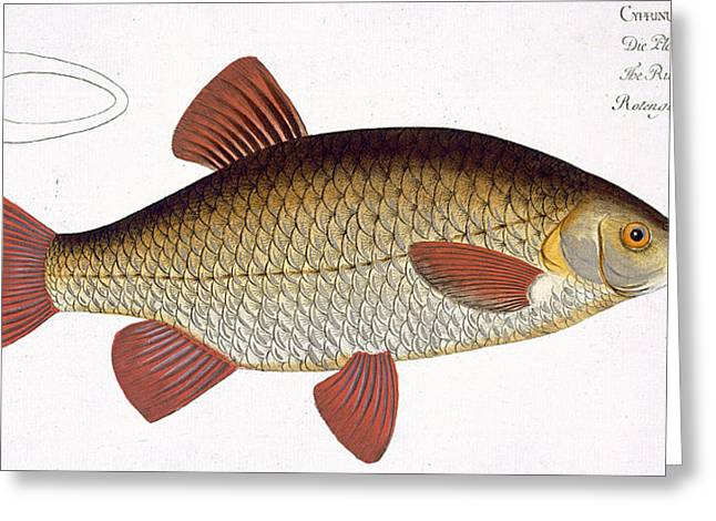 Cave Drawings Greeting Cards - Red Carp Greeting Card by Andreas Ludwig Kruger