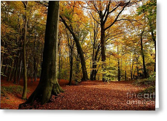 Limburg Greeting Cards - Red Carpet Greeting Card by Brothers Beerens