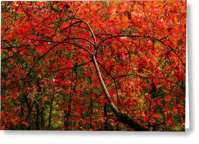 Great Smoky Mountains Greeting Cards - Red Greeting Card by Chad Dutson