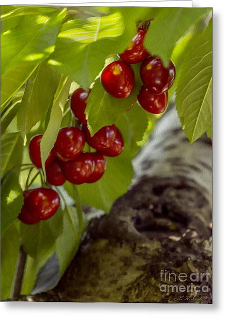 Commercial Photography Greeting Cards - Red Cherries Greeting Card by Iris Richardson