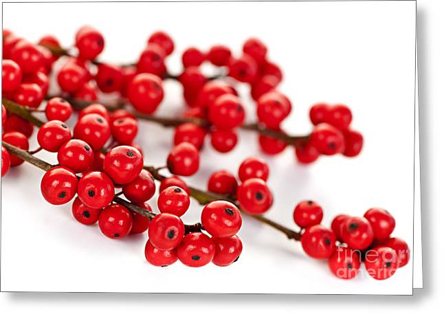 Festivities Greeting Cards - Red Christmas berries Greeting Card by Elena Elisseeva