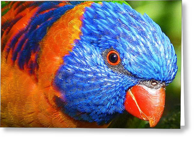 Margaret Saheed Greeting Cards - Red Collared Lorikeet Greeting Card by Margaret Saheed