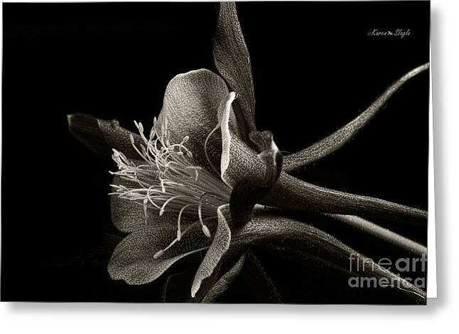 Red Columbine In Black And White Greeting Card by Karen Slagle