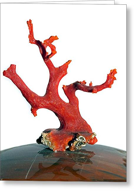 Jewellery Greeting Cards - Red coral Greeting Card by Science Photo Library