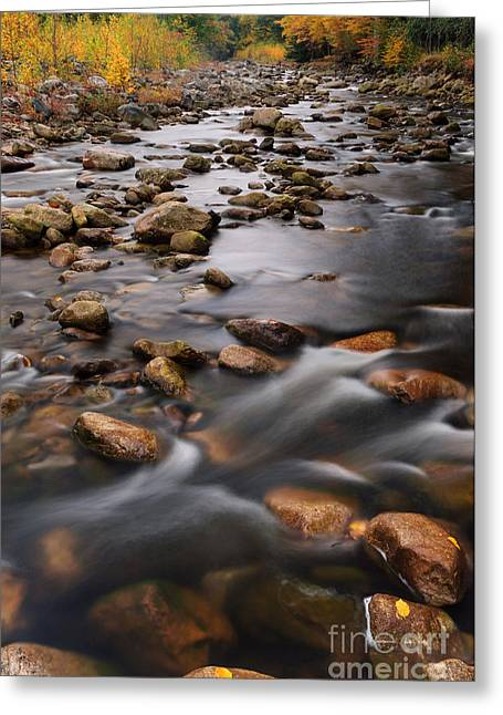 Stream Greeting Cards - Red Creek D30018667 Greeting Card by Kevin Funk