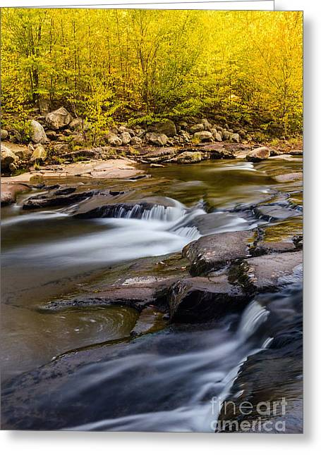 Dolly Sods Wilderness Greeting Cards - Red Creek D80000615 Greeting Card by Kevin Funk