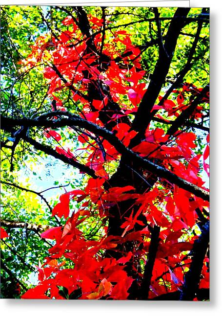 Darren Greeting Cards - Red Creeper 2 Greeting Card by Darren Robinson