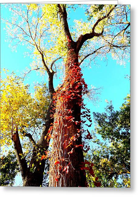 Red Leaves Greeting Cards - Red Creeper Greeting Card by Darren Robinson