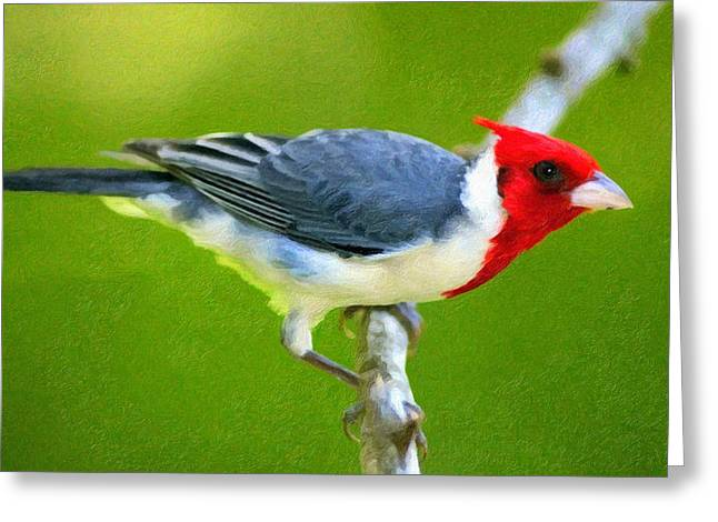 Red Crest Greeting Cards - Red Crested Cardinal Greeting Card by Georgiana Romanovna
