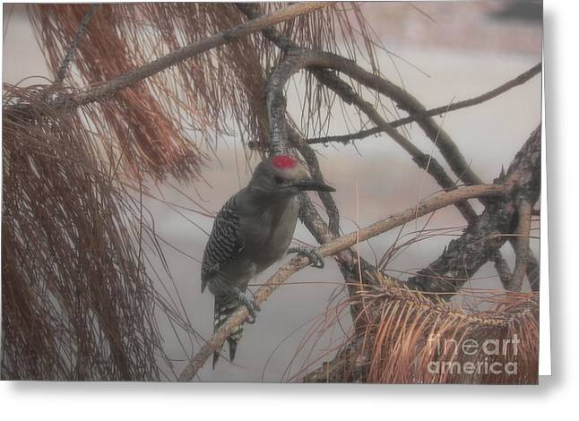 Red Crested Wood Pecker In Az Greeting Card by Chrisann Ellis