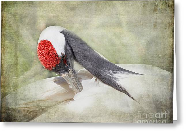 Aquatic Greeting Cards - Red-Crowned Crane Greeting Card by TN Fairey