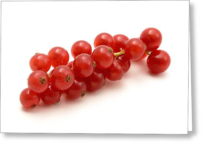 White Background Greeting Cards - Red Currant Greeting Card by Fabrizio Troiani