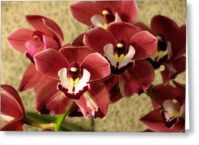 Red Cymbidium Orchid Photograph By Alfred Ng