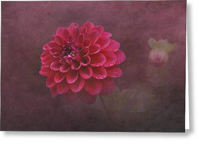 Raindrops On Flowers Greeting Cards - Red Dahlia Greeting Card by Angie Vogel