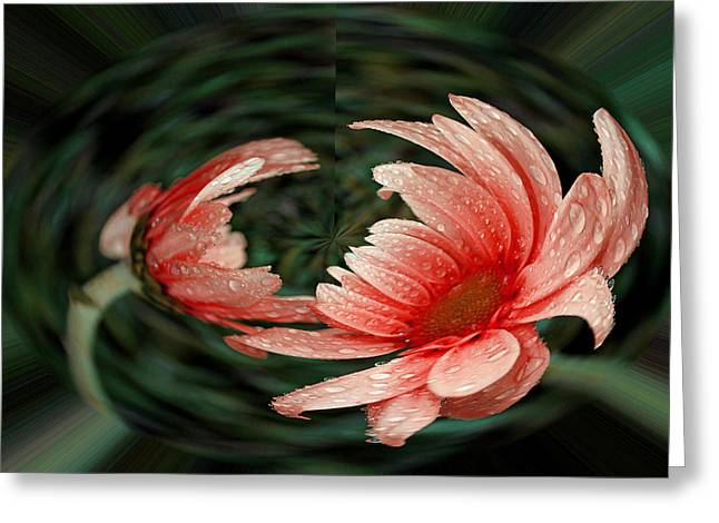Geometric Effect Greeting Cards - Red Daisy in a Bubble Greeting Card by Judy Vincent