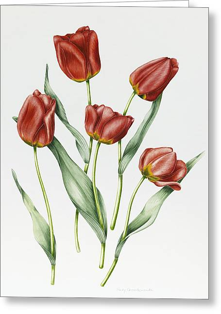 Botanical Greeting Cards - Red Darwin Tulips Greeting Card by Sally Crosthwaite