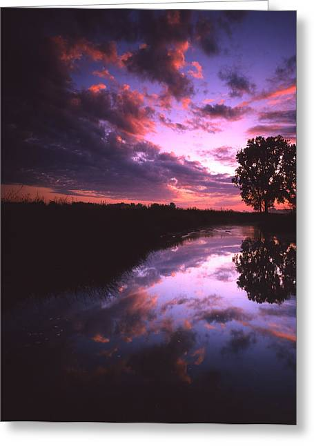 Hack-ma-tack National Wildlife Refuge Greeting Cards - Red Dawn Greeting Card by Ray Mathis