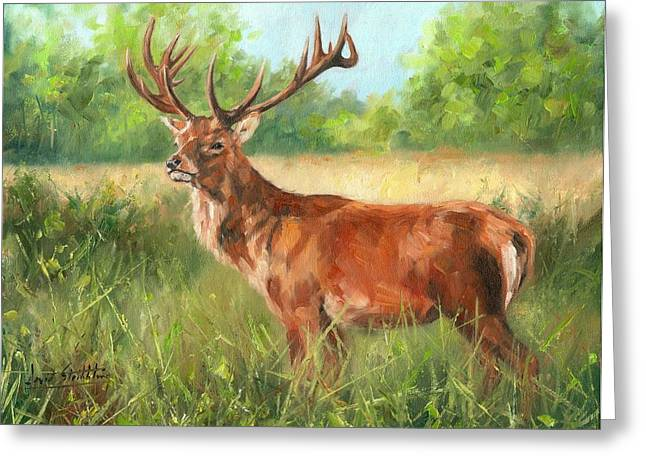 Red Deer Greeting Cards - Red Deer Greeting Card by David Stribbling