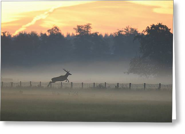 Red Deer Stag Jumping Fence Greeting Card by Ton Schenk