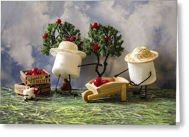 Apple Picking Greeting Cards - Red Delicious Greeting Card by Heather Applegate