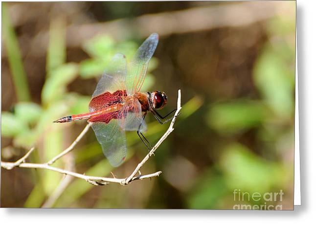Saddlebag Greeting Cards - Red Dragon Greeting Card by Al Powell Photography USA