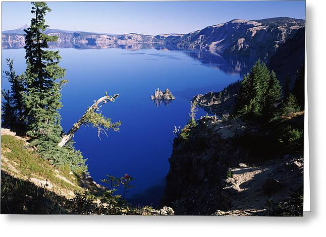 Crater Lake Greeting Cards - Red Elderberry Sambucus Racemosa Greeting Card by Panoramic Images
