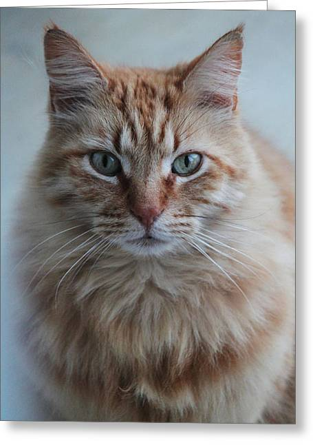 House Pet Greeting Cards - Red Greeting Card by Ella Char
