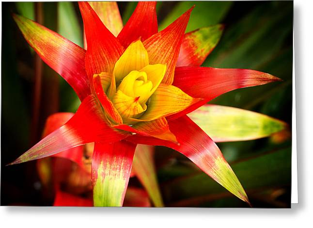 Florida Flowers Pyrography Greeting Cards - Red Exotic Flower Greeting Card by Eyzen M Kim