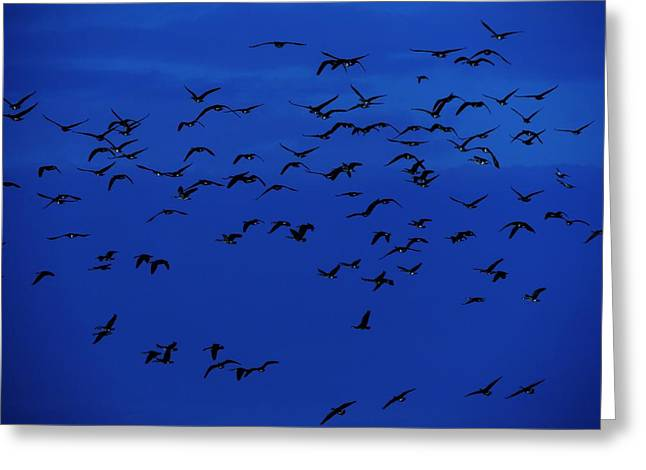Birds In Flight At Night Greeting Cards - Red Eye Flight Greeting Card by Todd Sherlock