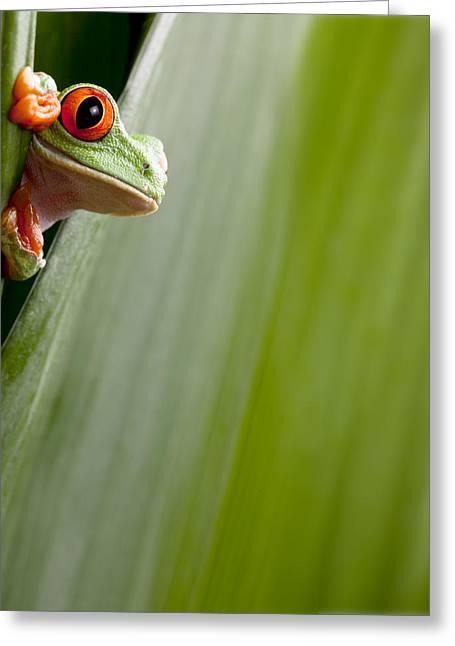 Tree Frog Greeting Cards - Red Eyed Tree Frog Peeping Greeting Card by Dirk Ercken