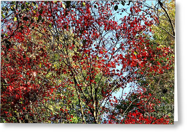 Red Fall Foliage Greeting Card by Tina M Wenger