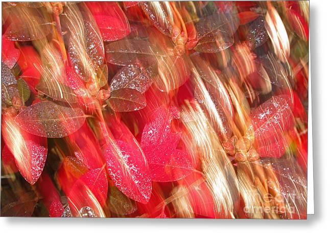Visual Art Greeting Cards - Red Fall Leaves 10 Greeting Card by Tony Cordoza
