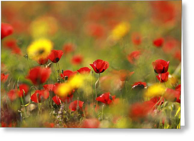 Flower Photos Pyrography Greeting Cards - Red Field Greeting Card by Alon Meir