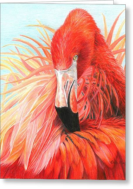 Seabirds Greeting Cards - Red Flamingo Greeting Card by Carla Kurt