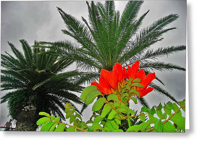 Arona Greeting Cards - Red flower. Palma. Canary Islands. Greeting Card by Andy Za