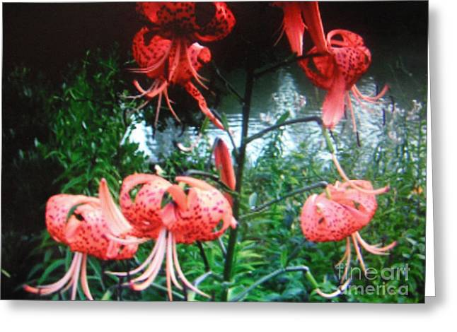 Red Photographs Pyrography Greeting Cards - Red flowers Greeting Card by Iris Boyd-cherian