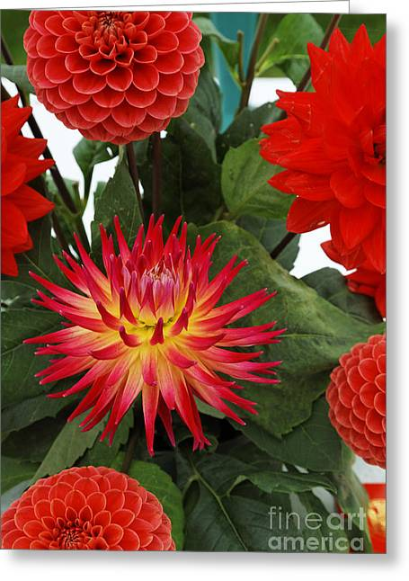 Piglets Greeting Cards - Red Flowers Greeting Card by Robert Preston