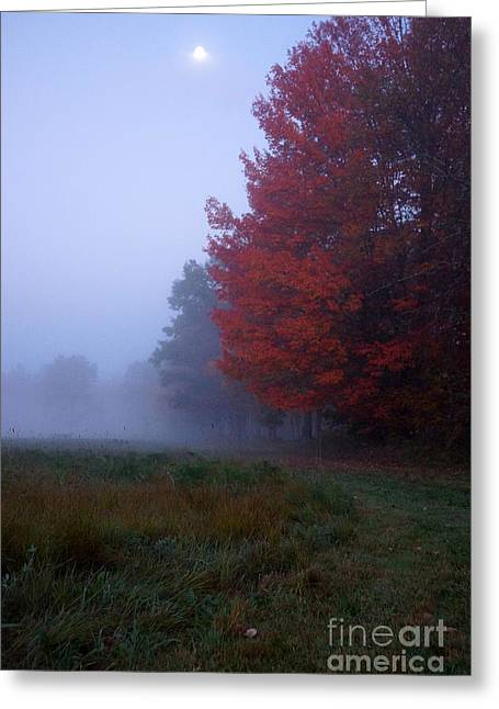 Newengland Greeting Cards - Red Foliage Foggy Field Greeting Card by Kerri Mortenson