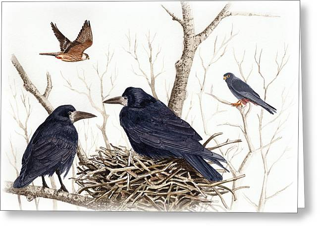 Red Falcon Greeting Cards - Red-footed falcon Greeting Card by Deak Attila