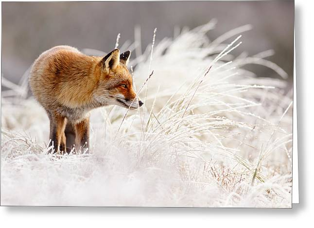 Red Eye Greeting Cards - Red Fox and Hoar Frost _ The Catcher in the Rime Greeting Card by Roeselien Raimond