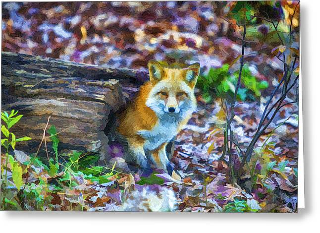 Red Fox at Home Greeting Card by John Haldane