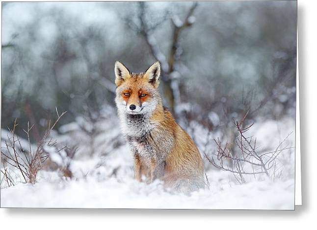 Smiling Animals Greeting Cards - Red Fox Blue World Greeting Card by Roeselien Raimond