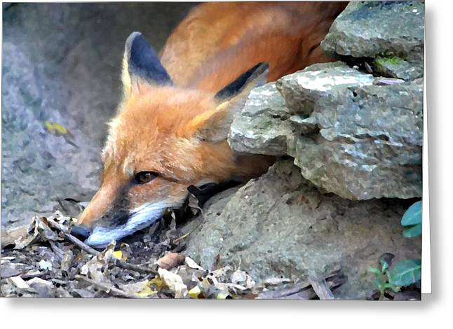 Gray Muzzle Greeting Cards - Red Fox Greeting Card by Deena Stoddard